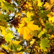 Autumn leaves - Stock fotografie