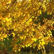 Autumn gold leaves — Stock Photo