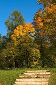 Scale e foresta — Foto Stock