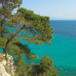 Pines above the sea — Stock Photo #1330152