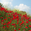 Stock Photo: Poppies and sky diagonal