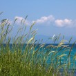 Some grass near the sea - Stock Photo