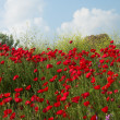 Poppies and sky 2 — Stock Photo