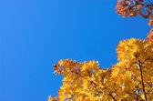 Orange leaves diagonal — Stock Photo