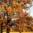 Autumn park — Stock Photo #1379996