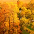 Orange autumn park - Stock Photo