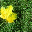 Single yellow maple leaf — Stock Photo