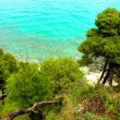 Pine trees near the sea - Stock Photo