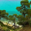 Stock Photo: Pines near coast