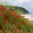 Seascape with poppies — 图库照片