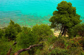 Pines near the seaside — Stock Photo