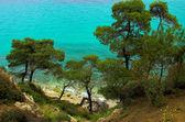 Pines near the coast — Stock Photo