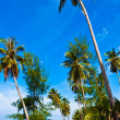 Coconut palms on tropic coast — Stock Photo