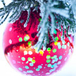 Red ball on fir branch - Stock Photo