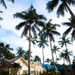 Modern bungalows and palms - Stock Photo