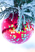 Red ball on fir branch — Stock Photo