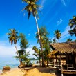 Coconut palms on tropic coast - Stock Photo