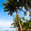 Stock Photo: Coconut palms on tropic bank