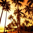Coconut palms on sand beach in tropic - Stock fotografie