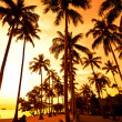 Coconut palms on sand beach in tropic - Stok fotoraf