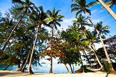 Straw hammocks on palms — Stock Photo