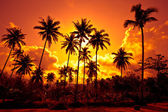 Coconut palms on sand beach in tropic — Stock Photo