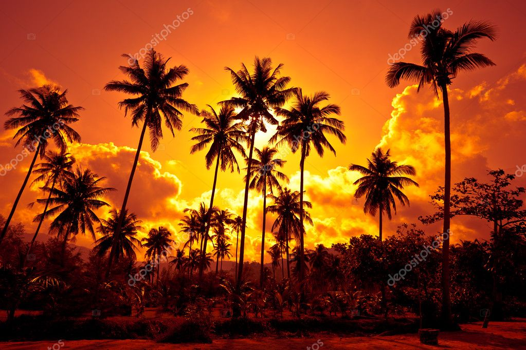 Coconut palms on sand beach in tropic on sunset. Thailand, Koh Chang, Klong Prao beach — Stock Photo #2019225