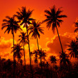 Coconut palms on sand beach — Stock Photo #2319244
