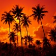 Stock Photo: Coconut palms on sand beach