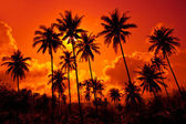 Coconut palms on sand beach — Stock Photo