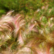 Blooming grass — Stock Photo #1199403