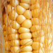 Stock Photo: Maize cob