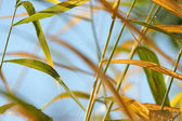 Autumn grass — Stock Photo