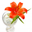 Tiger lily — Stock Photo #1218684