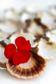 Cockleshells and a flower — Stock Photo