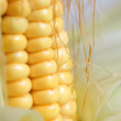 Maize cob — Stock Photo