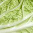 Celery cabbage — Stock Photo