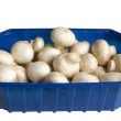 White field mushrooms in box — Stock Photo