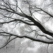 Winter tree branch — Stock Photo