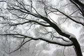 Winter tree branch — Stock Photo