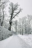 Lane in winter park — Stock Photo
