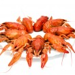Stock Photo: Crawfishes