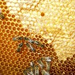 Honeycomb - Stock Photo