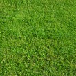 Green grass background — Stock Photo #1200493