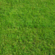 Green grass background — Stockfoto #1200493