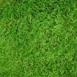 Green grass background — Stock Photo #1200612