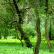 Green forest — Stock Photo #1200659