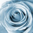 Rose - 