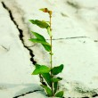 Photo: Green plant growing from cracked earth