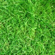 Green grass background — Stock Photo #1200934